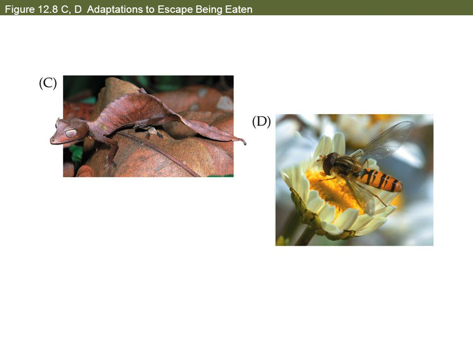 Figure 12.8 C, D Adaptations to Escape Being Eaten