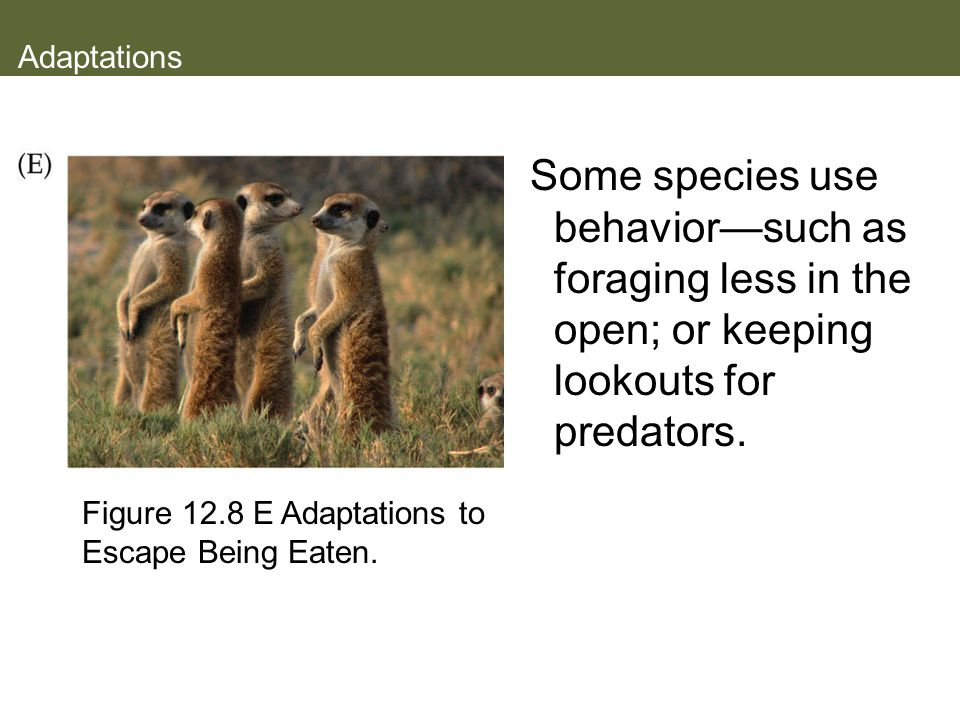 Adaptations Some species use behavior—such as foraging less in the open; or keeping lookouts for predators.