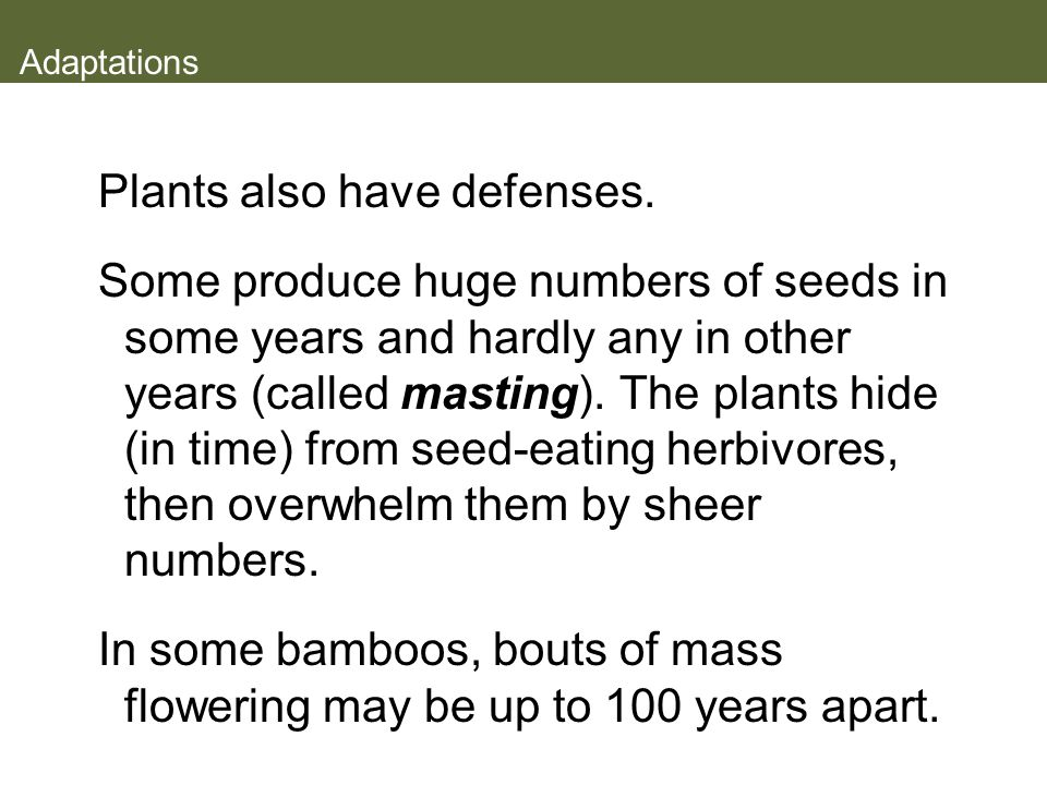 Plants also have defenses.