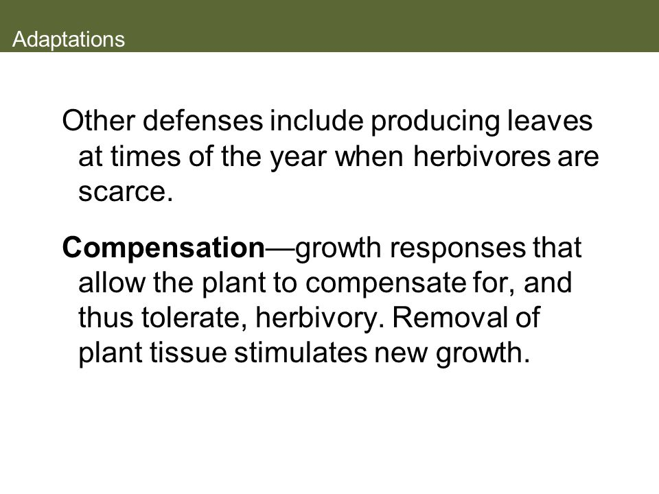 Adaptations Other defenses include producing leaves at times of the year when herbivores are scarce.