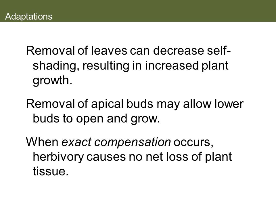 Removal of apical buds may allow lower buds to open and grow.