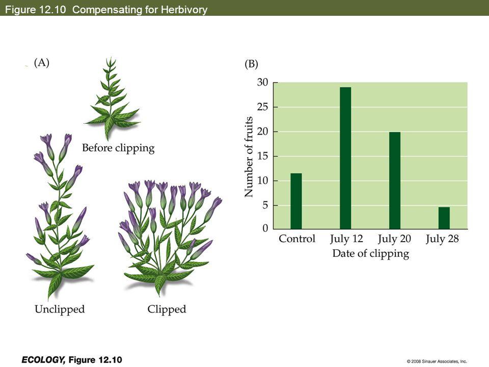 Figure 12.10 Compensating for Herbivory