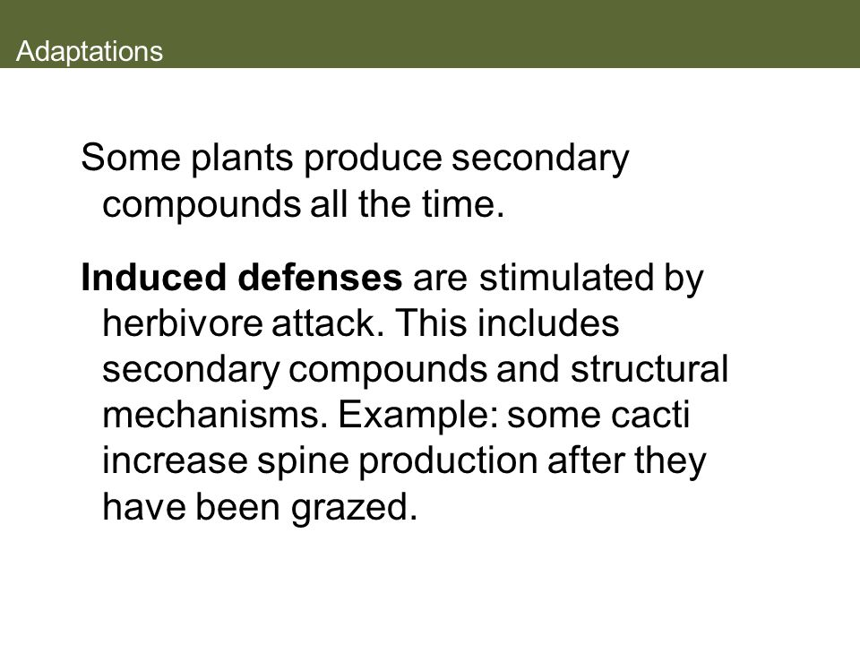 Some plants produce secondary compounds all the time.