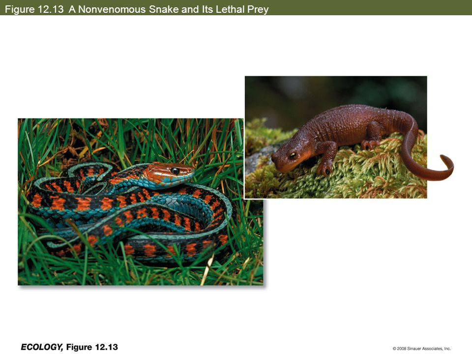 Figure 12.13 A Nonvenomous Snake and Its Lethal Prey