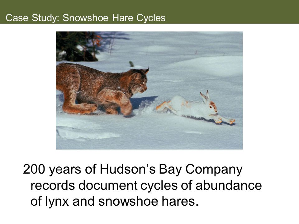 Case Study: Snowshoe Hare Cycles
