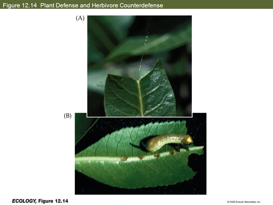 Figure 12.14 Plant Defense and Herbivore Counterdefense