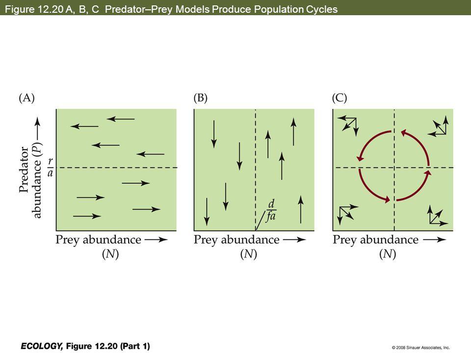 Figure 12.20 A, B, C Predator–Prey Models Produce Population Cycles