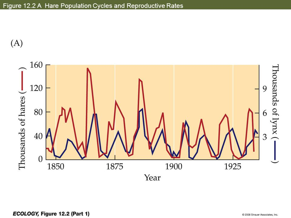 Figure 12.2 A Hare Population Cycles and Reproductive Rates