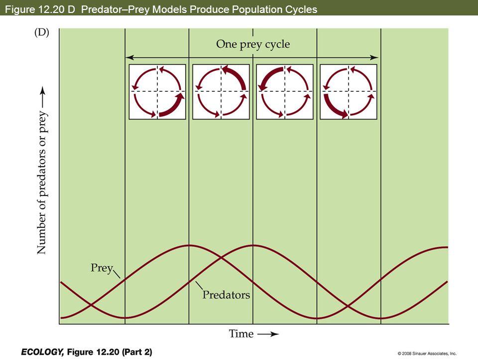 Figure 12.20 D Predator–Prey Models Produce Population Cycles