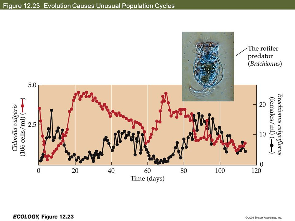 Figure 12.23 Evolution Causes Unusual Population Cycles
