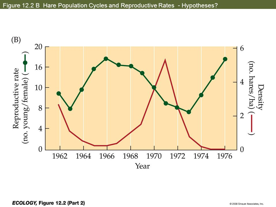 Figure 12.2 B Hare Population Cycles and Reproductive Rates - Hypotheses