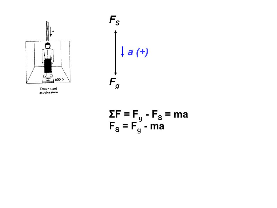 FS a (+) Fg ΣF = Fg - FS = ma FS = Fg - ma