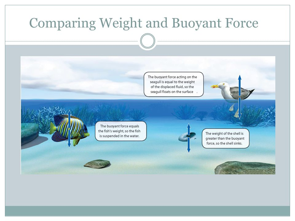 Comparing Weight and Buoyant Force