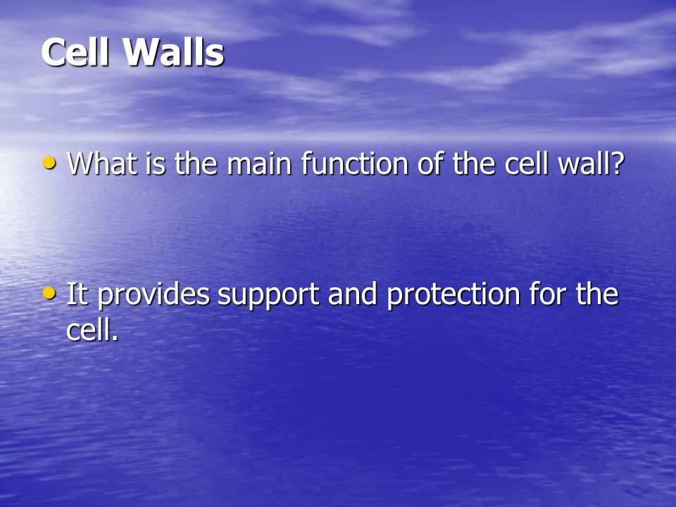 Cell Walls What is the main function of the cell wall