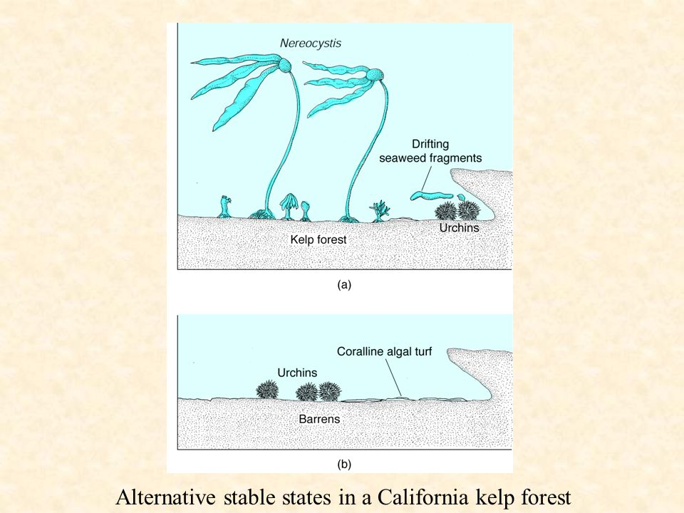 Alternative stable states in a California kelp forest