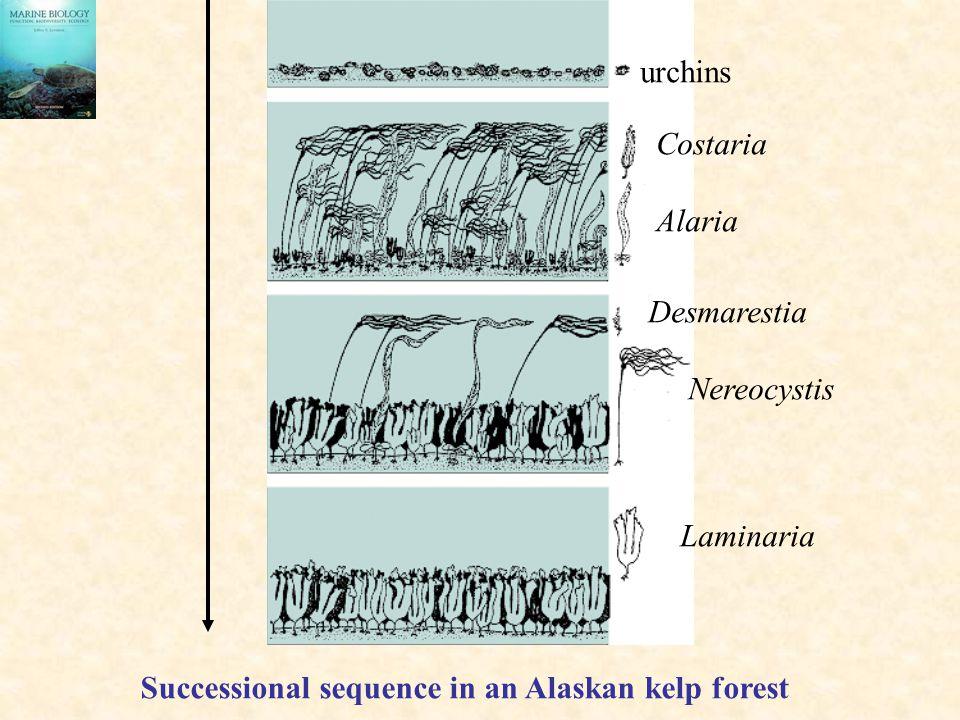 urchins Costaria. Alaria. Desmarestia. Nereocystis.
