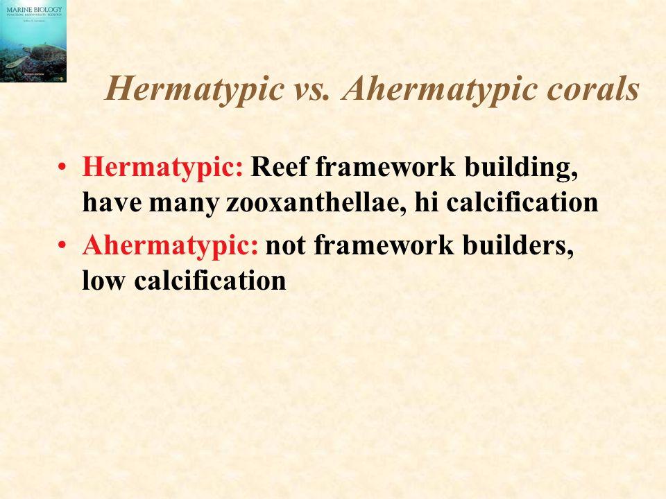 Hermatypic vs. Ahermatypic corals