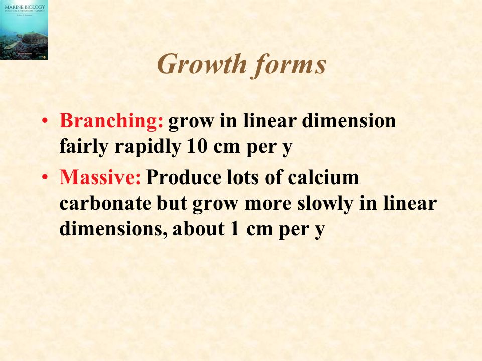 Growth forms Branching: grow in linear dimension fairly rapidly 10 cm per y.