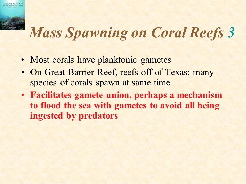 Mass Spawning on Coral Reefs 3