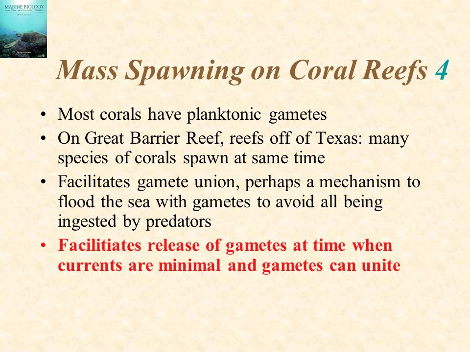 Mass Spawning on Coral Reefs 4