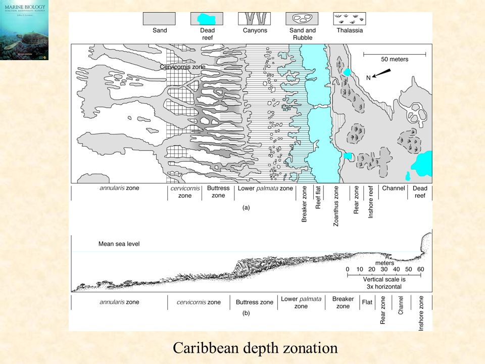 Caribbean depth zonation