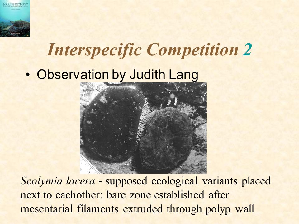 Interspecific Competition 2
