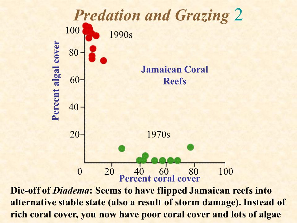 Predation and Grazing 2 100 1990s 80 Jamaican Coral Reefs