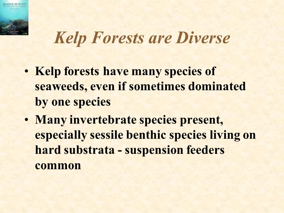 Kelp Forests are Diverse