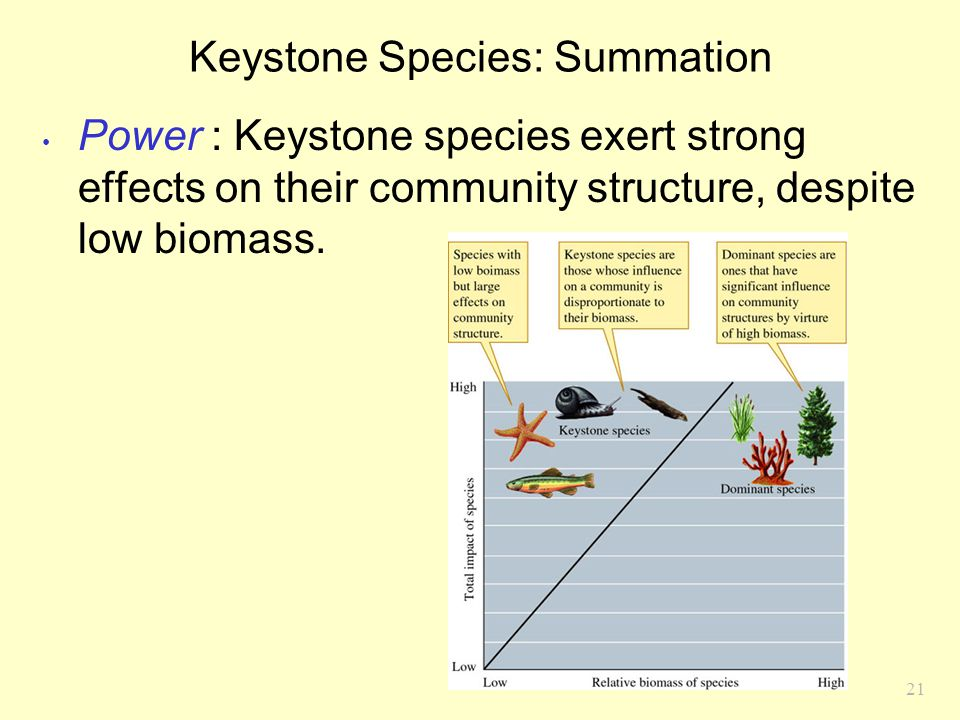 Keystone Species: Summation