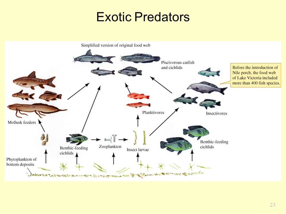 Exotic Predators