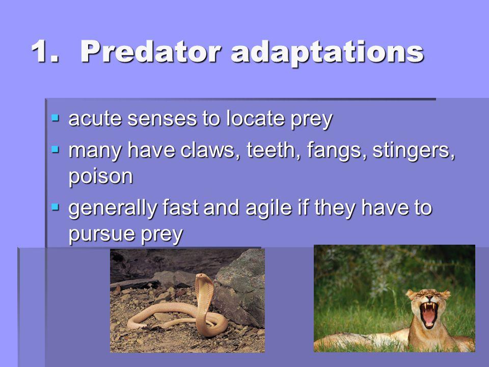 1. Predator adaptations acute senses to locate prey