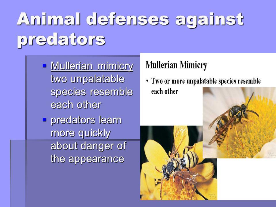 Animal defenses against predators