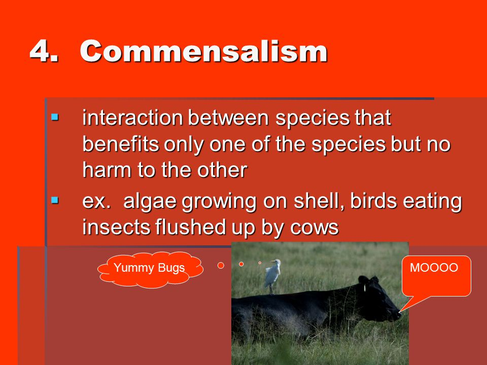 4. Commensalism interaction between species that benefits only one of the species but no harm to the other.