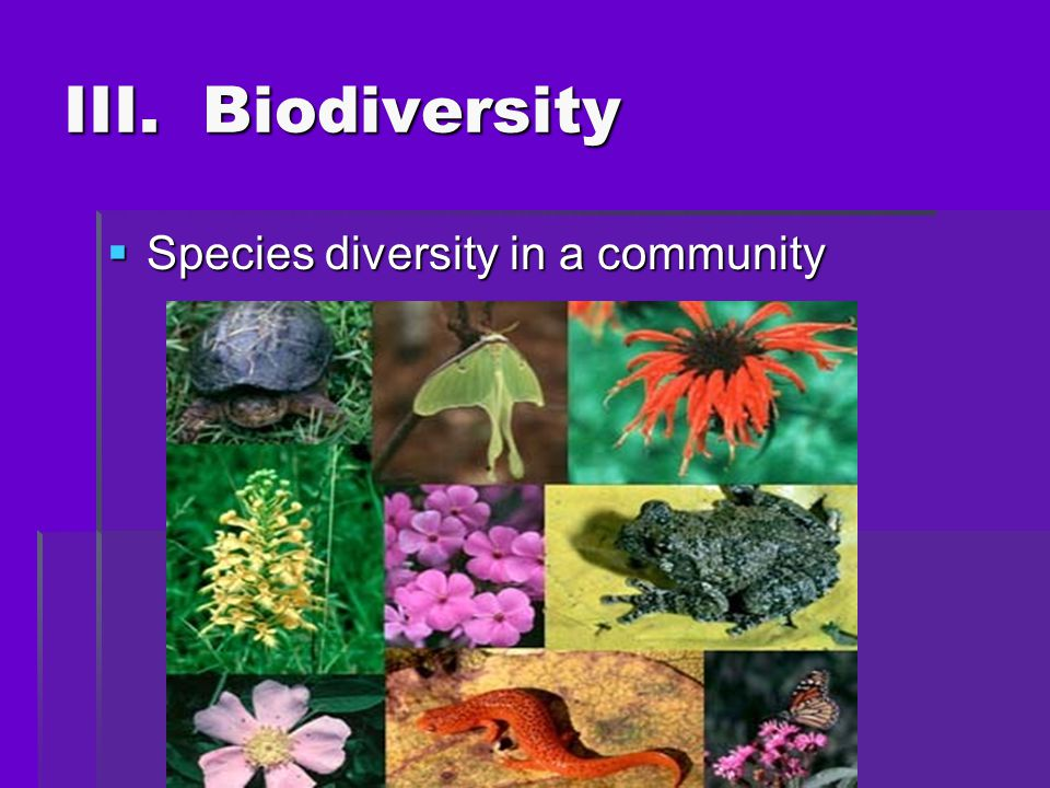 III. Biodiversity Species diversity in a community