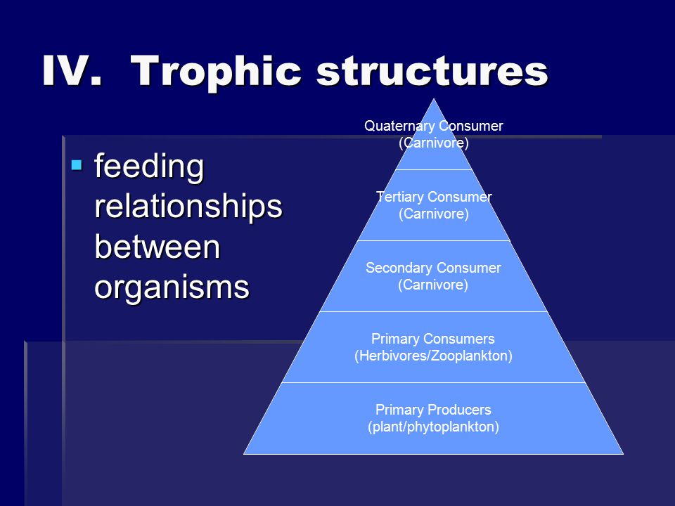 IV. Trophic structures feeding relationships between organisms