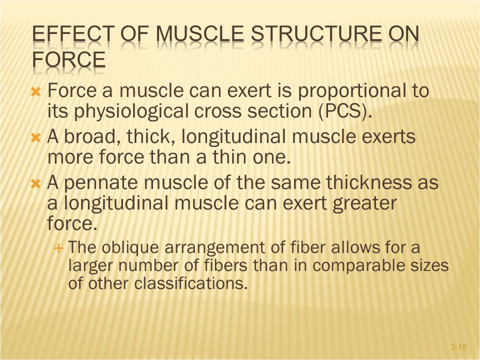 Effect of Muscle Structure on Force