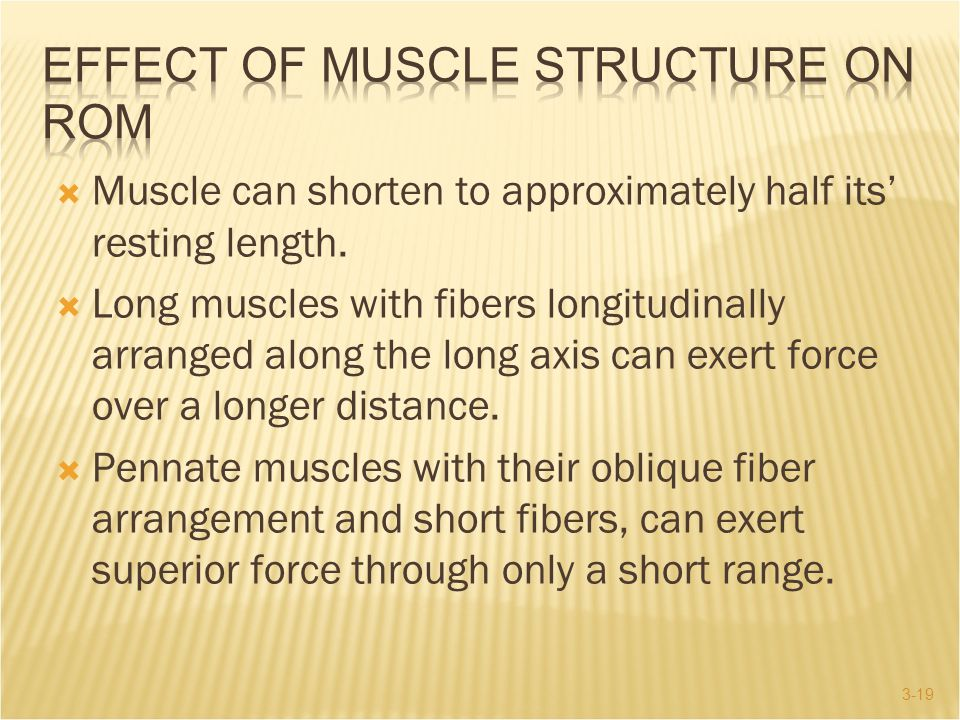 Effect of Muscle Structure on ROM