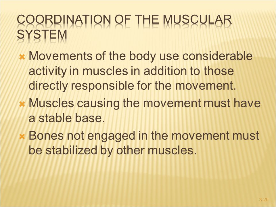 COORDINATION OF THE MUSCULAR SYSTEM