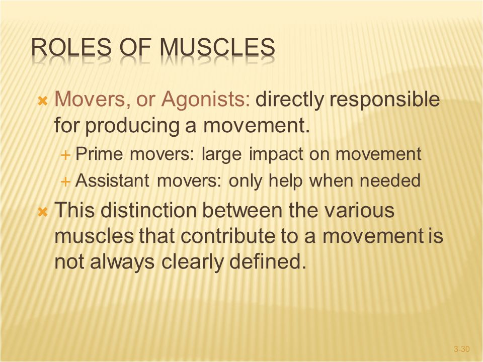 Roles of Muscles Movers, or Agonists: directly responsible for producing a movement. Prime movers: large impact on movement.