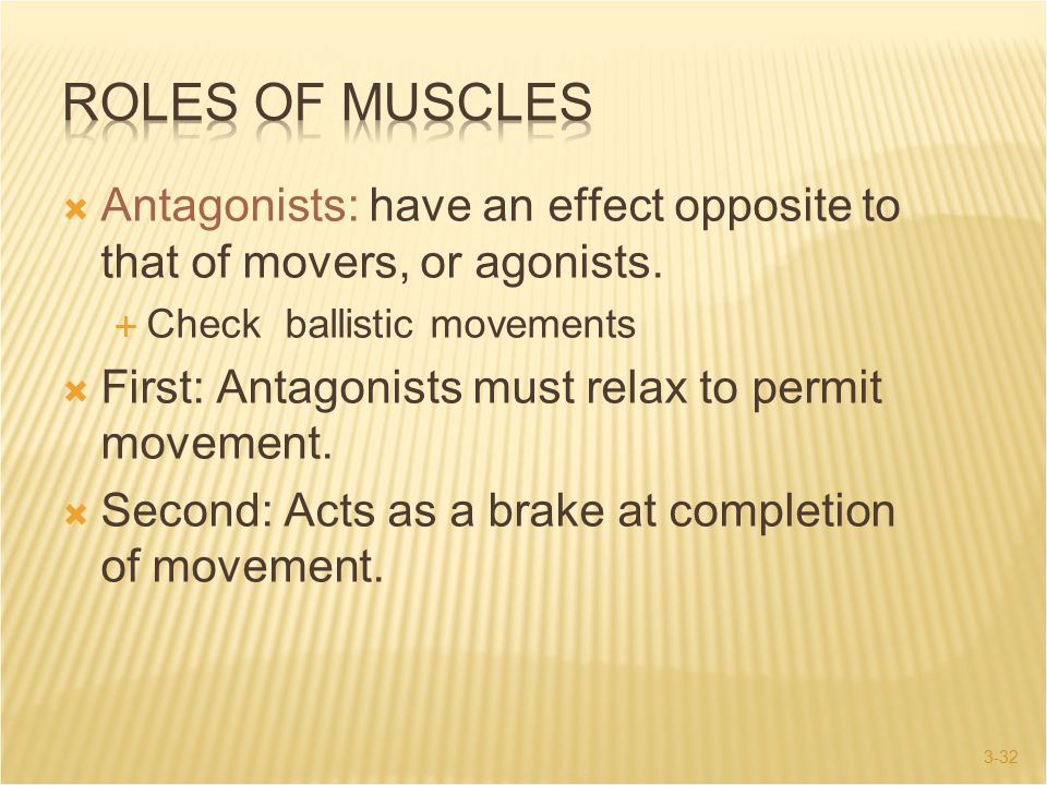 Roles of Muscles Antagonists: have an effect opposite to that of movers, or agonists. Check ballistic movements.