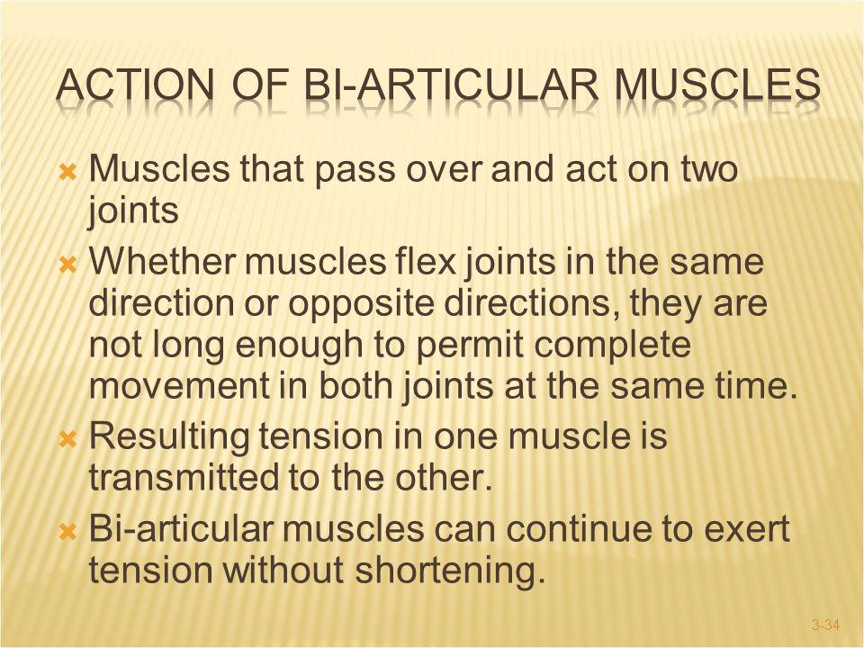 Action of Bi-Articular Muscles
