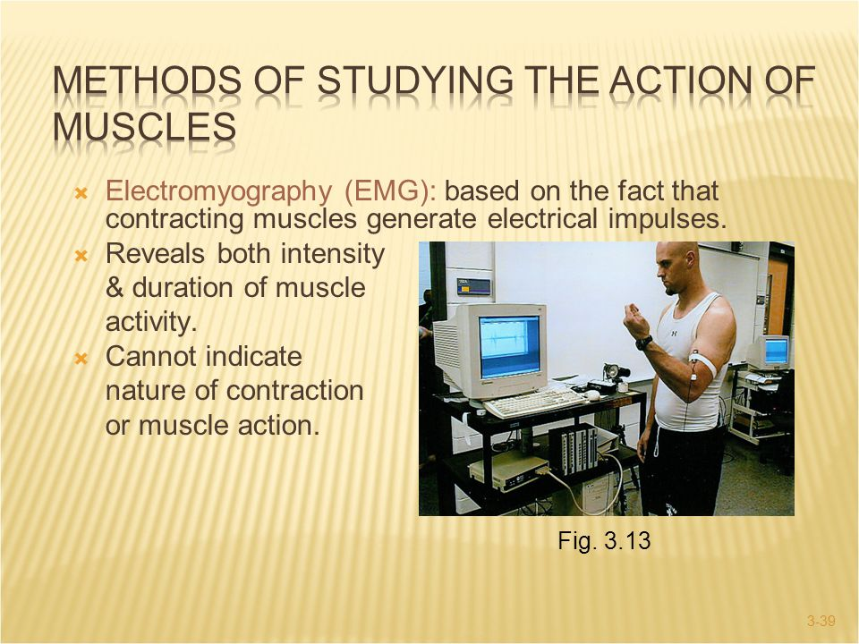 METHODS OF STUDYING THE ACTION OF MUSCLES