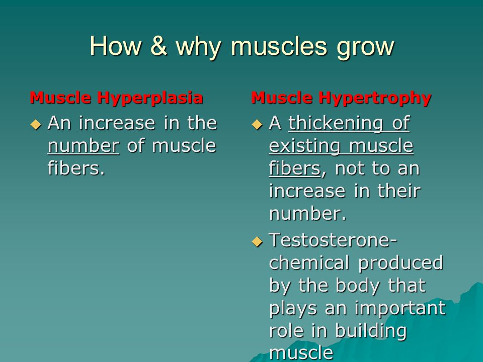 How & why muscles grow An increase in the number of muscle fibers.