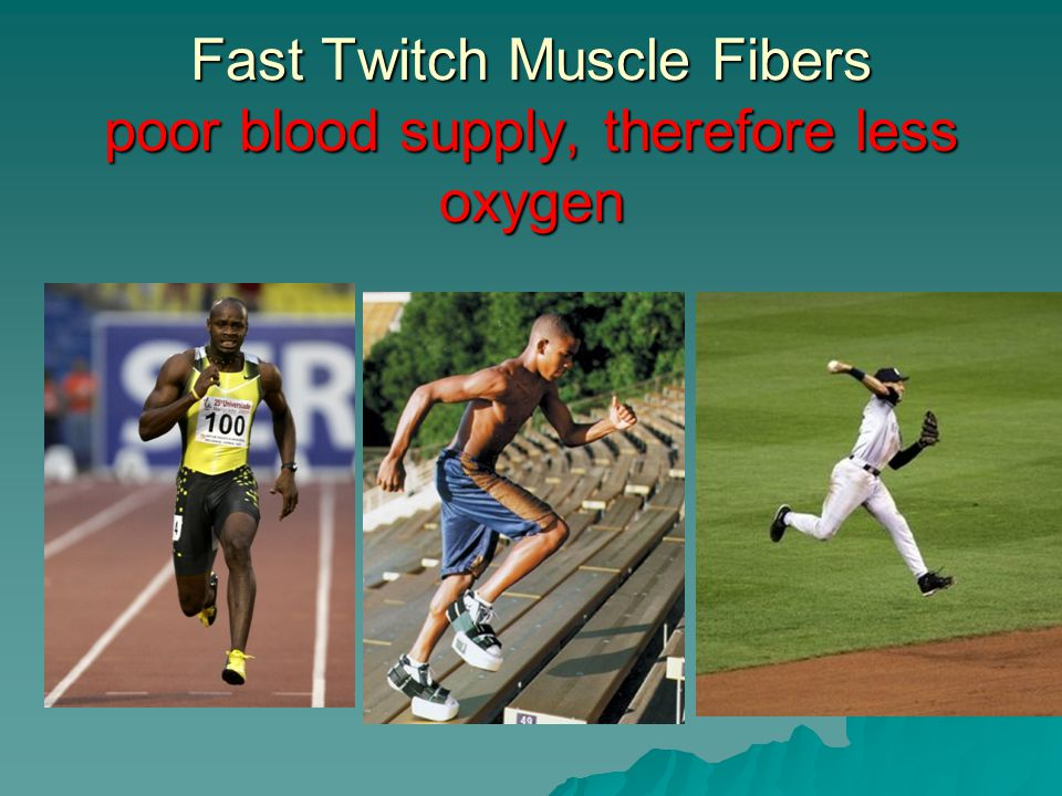 Fast Twitch Muscle Fibers poor blood supply, therefore less oxygen
