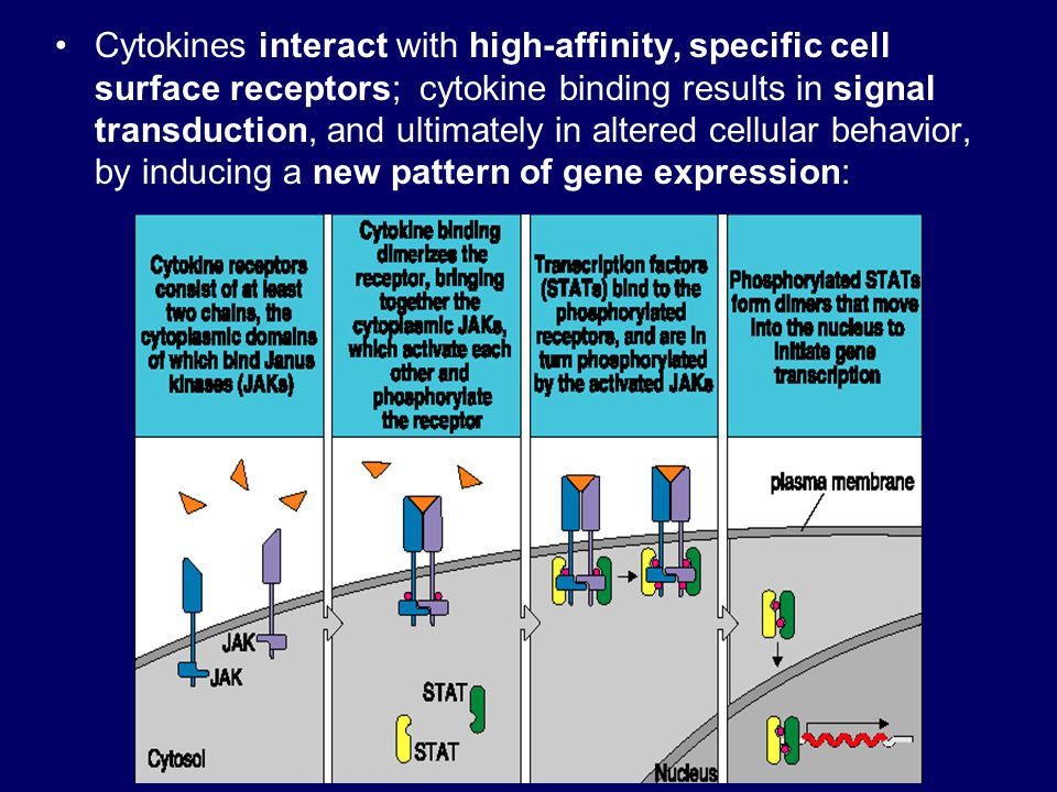 Cytokines interact with high-affinity, specific cell surface receptors; cytokine binding results in signal transduction, and ultimately in altered cellular behavior, by inducing a new pattern of gene expression: