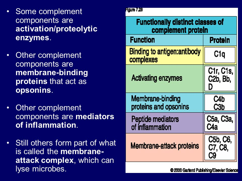 Some complement components are activation/proteolytic enzymes.
