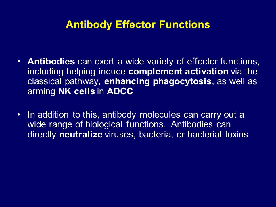effector functions of antibodies essay They share more than 95% homology in the amino acid sequences of the fc regions but show major differences in the amino acid composition and structure of the hinge region the fc region mediates effector functions, such as antibody-dependent cellular cytotoxicity (adcc) and complement-dependent cytotoxicity (cdc.
