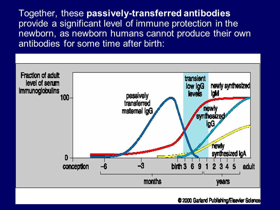 Together, these passively-transferred antibodies provide a significant level of immune protection in the newborn, as newborn humans cannot produce their own antibodies for some time after birth: