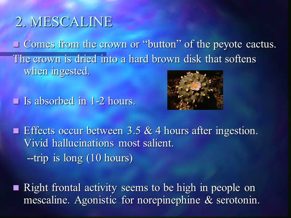 2. MESCALINE Comes from the crown or button of the peyote cactus.