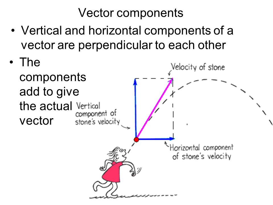 Vector components Vertical and horizontal components of a vector are perpendicular to each other.